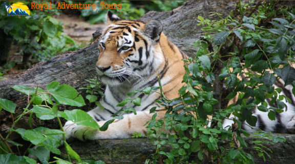 Book a Safari in Ranthambore For The Best Price Guarantee