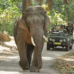 Wildlife Rajasthan Tour Deals – Existence is Happiness
