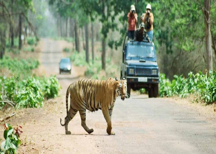 Different things to do on 2 Day Visit to Ranthambore