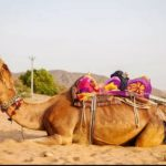 What Are The Tips of Planning Rajasthan Tour