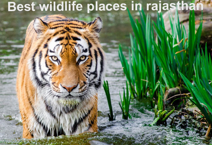best wildlife places in rajasthan