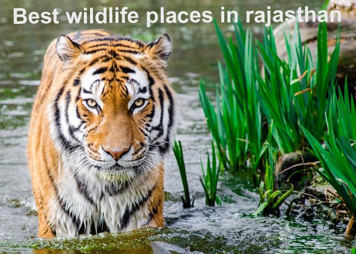 Best WildLife Places in Rajasthan