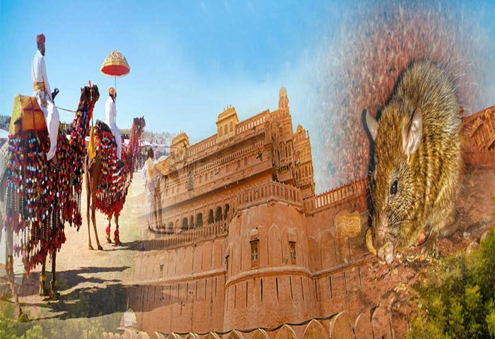 Best Time to See Famous Place of Bikaner
